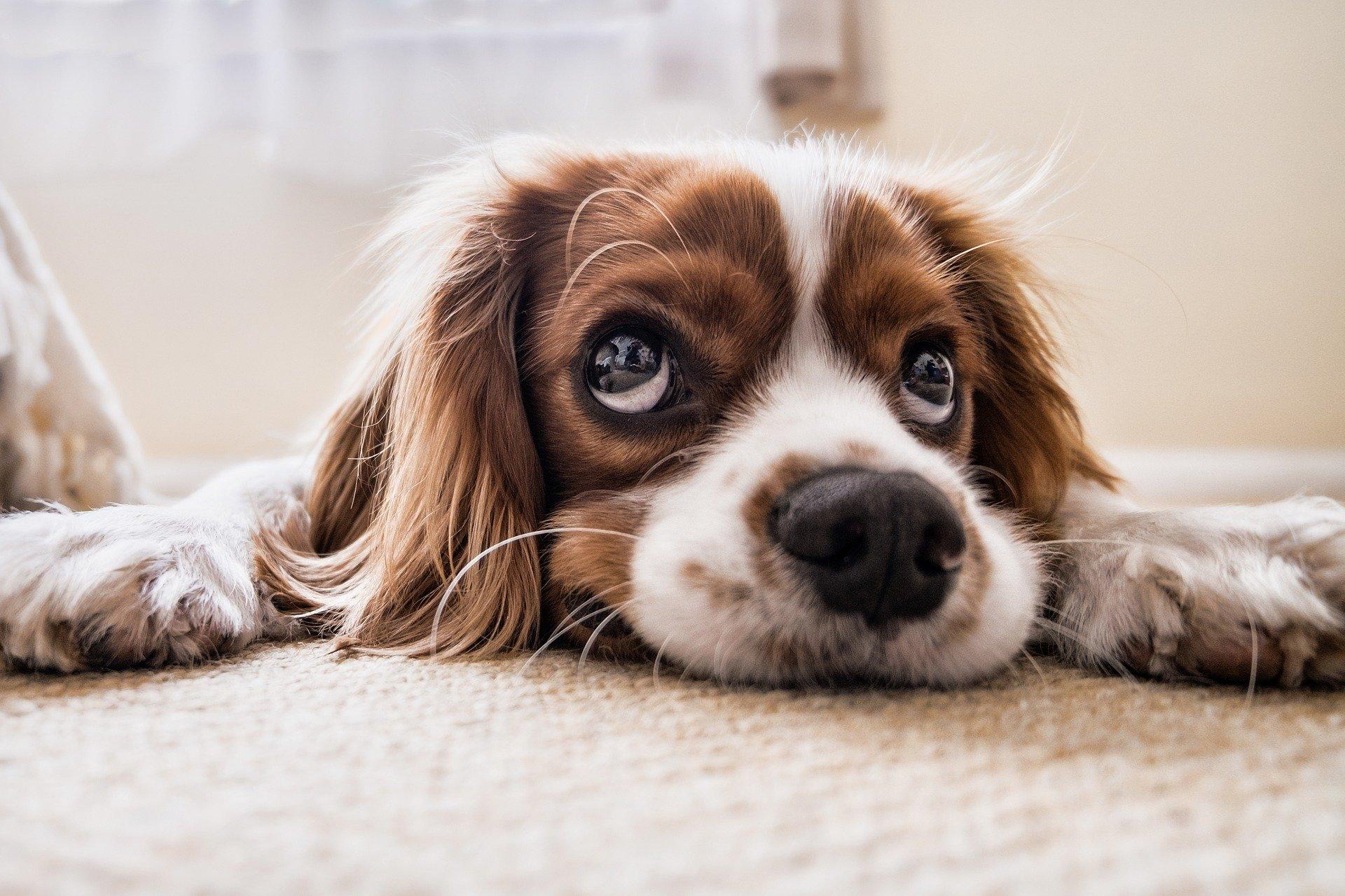 2020新莊寵物美容小型犬大修費用表一覽/新莊寵物美容/新莊便宜寵物美容